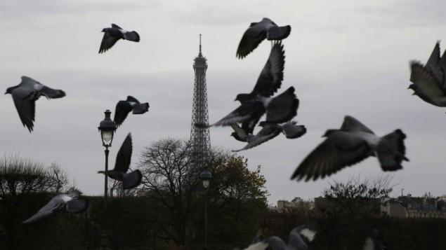 31/03/2058 : Le pigeon parisien est de retour