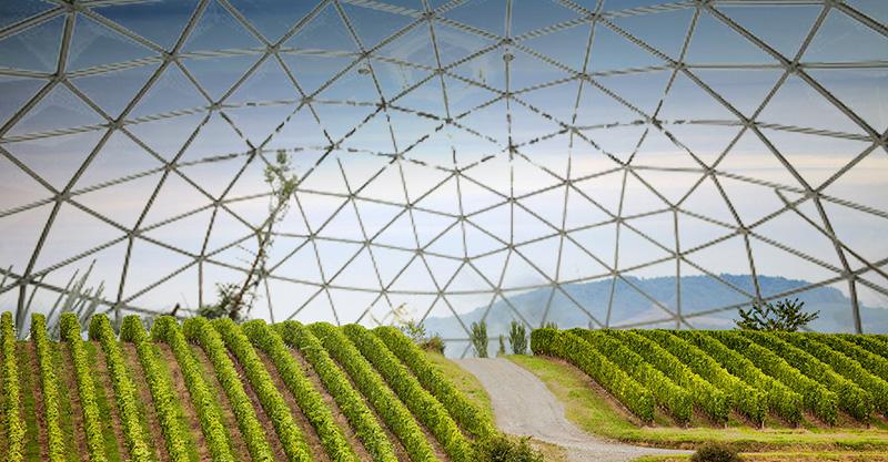 Vignobles climatisés | 10/08/2065