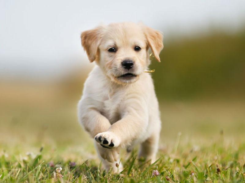Consommation | Les animaux de compagnie voient leur croissance passer, désormais, sous contrôle hormonal | 28/01/2069